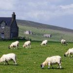 Ирландии сельское хозяйство
