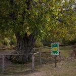 Гора Демерджи Кавказской пленницы дерево сидел Юрий Никулин