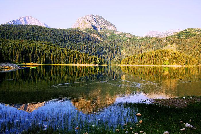 Черногория леса