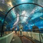 Таиланд аквариум Пхукета