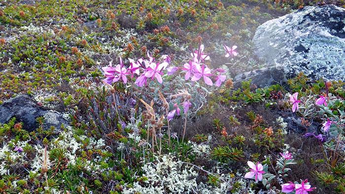 Черногория редких растений
