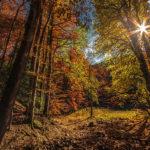 Черногория парк Биоградская гора