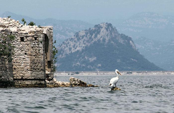 Черногория скадарское озеро пеликаны