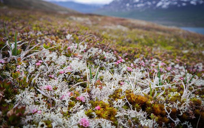 Норвегия растения